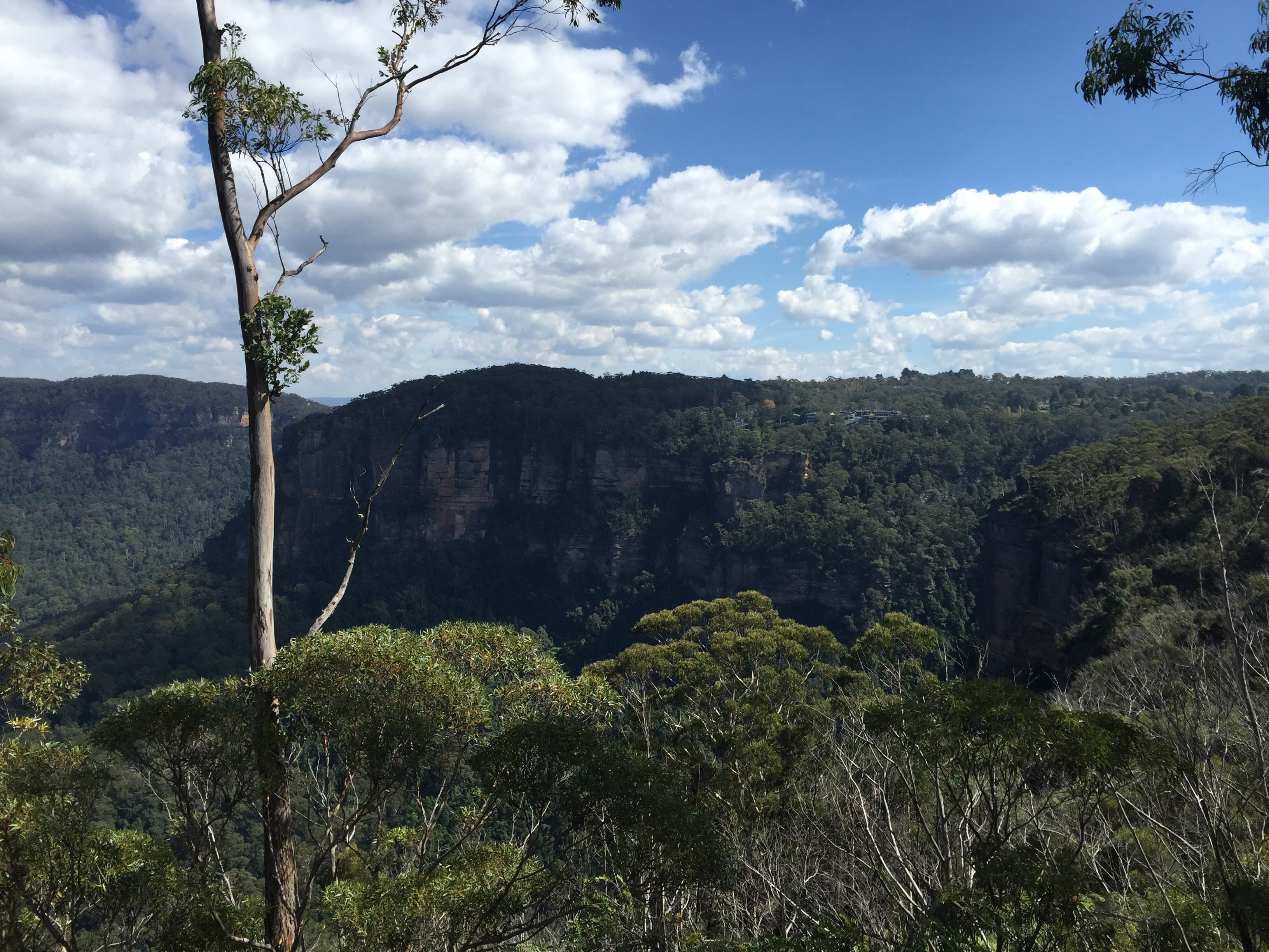 Discovering NSW